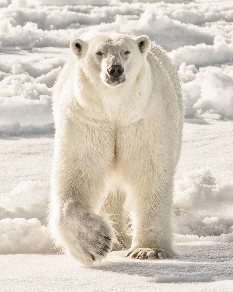 White Bear in a White Land - Ronnie Hartman - MPS