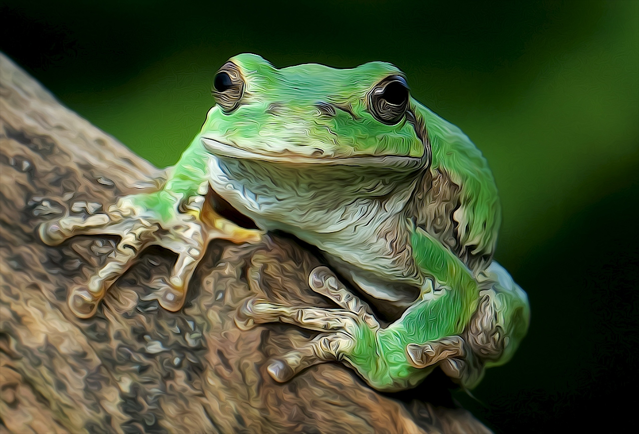 Grey Tree Frog - Don Specht - MNCC