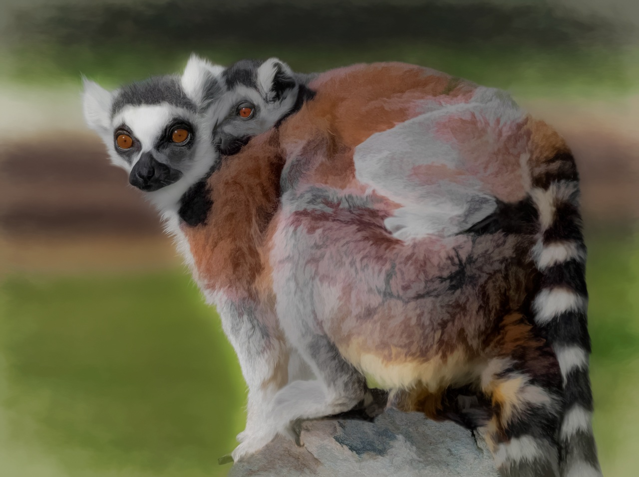 Lemur Mother and Baby - Marianne Diericks - WWPC