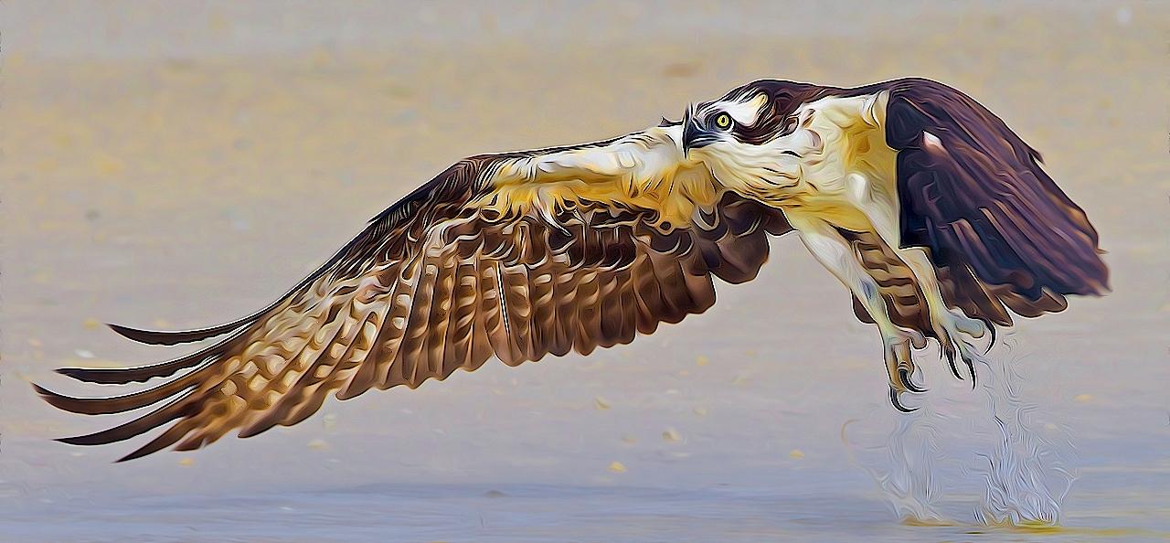Osprey Takeoff - Don Specht - MNCC