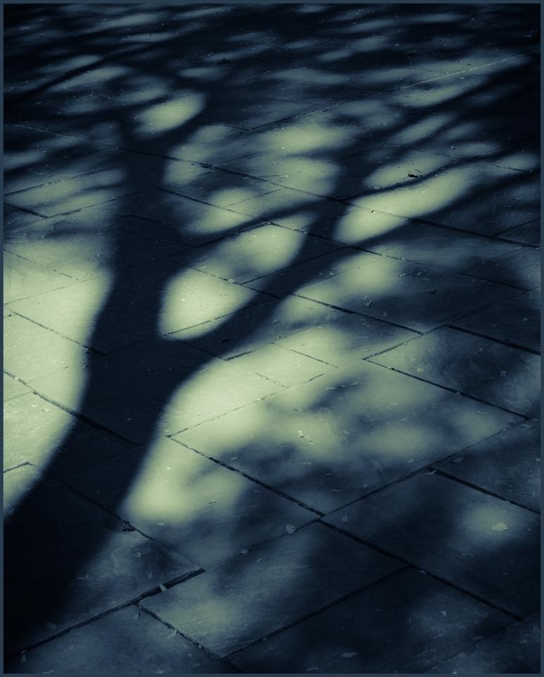 Shadows - Leanne Zeller - MCC