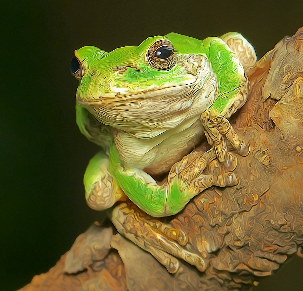 Smiling Tree Frog - Don Specht - MNCC