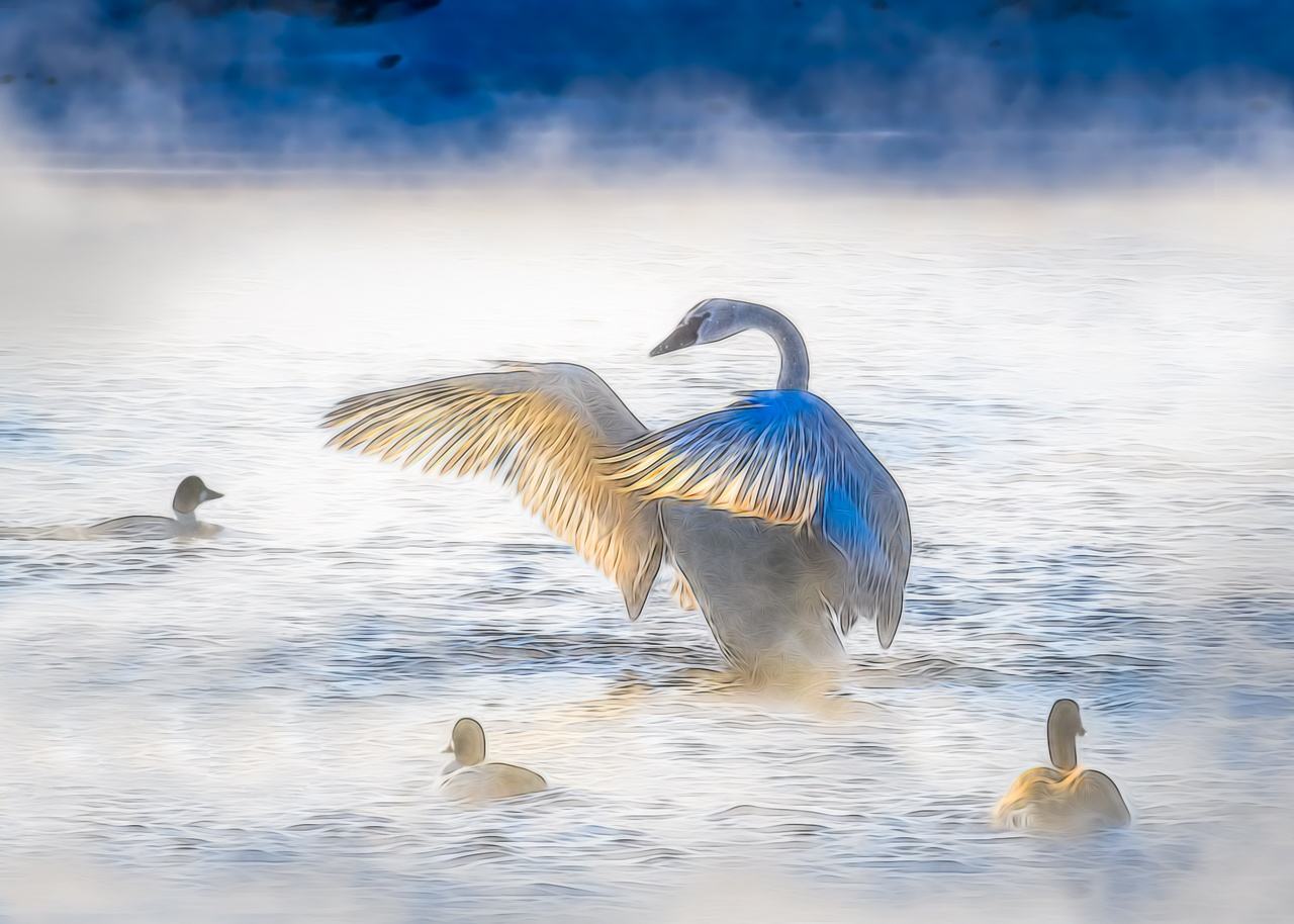Honorable Mention - Swan on Frigid Morning - Marianne Diericks - WWPC