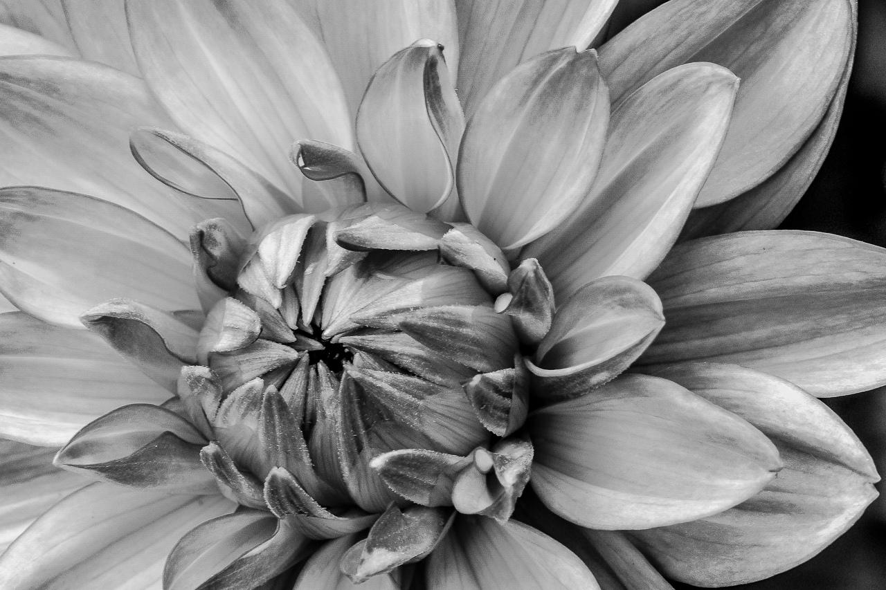 Macro Flower - Rich Roberts - MVPC