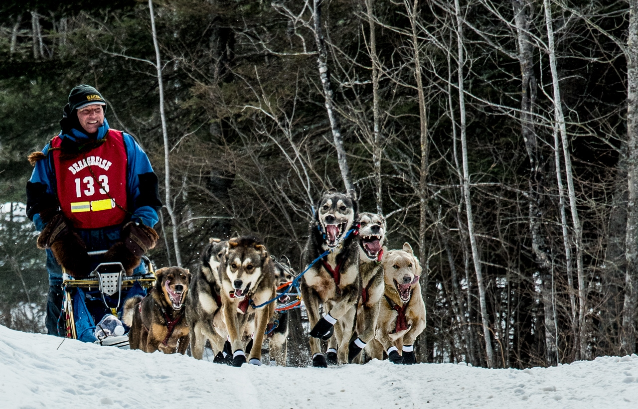 Sled Dog Racer - Rich Roberts - MVPC
