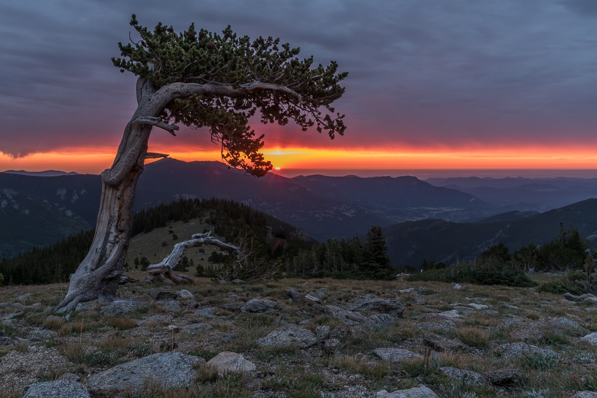 Honorable Mention - Sunrise at Bristlecone - Diane Herman - MNPC