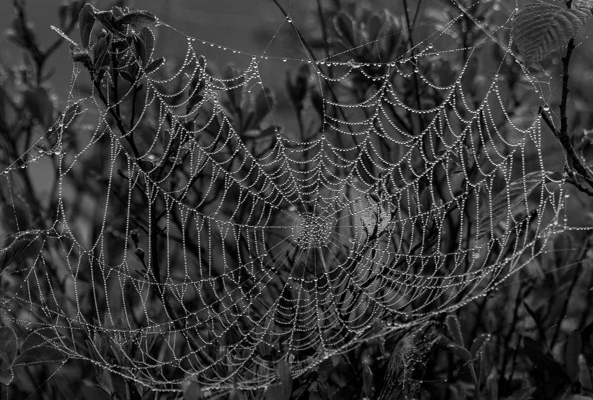Honorable Mention - The Web - Diane Herman - MNPC