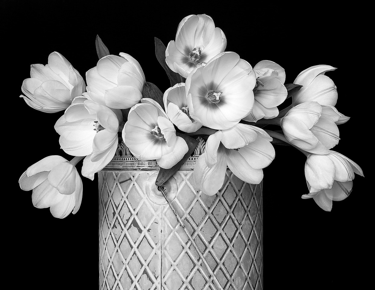 Honorable Mention - Tulips in Metal Can - Terry Butler - WWPC