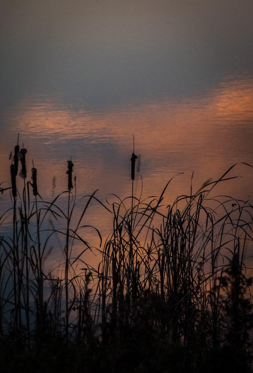 Crex Reflection - Ronald Lagerquist - MNPC