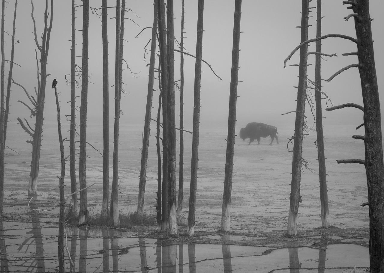 Foggy Morning in Yosemite - Karl Fiegenschuh - MNPC