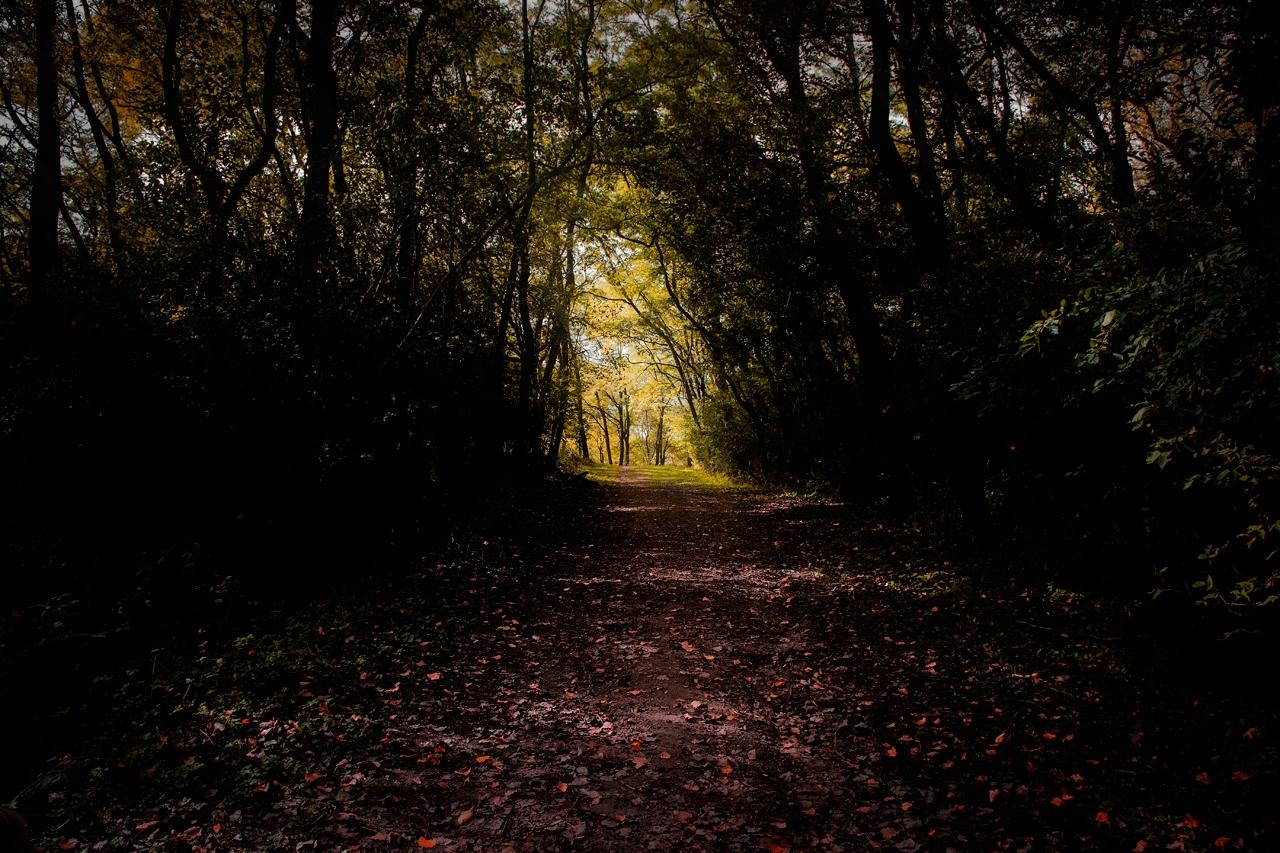 Forest Path - Kelly Mroczek - MVPC