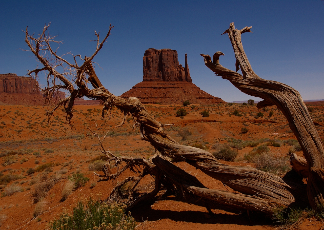Monument Valley Mitten and Mesquite - Sharon Gibbons - MCC