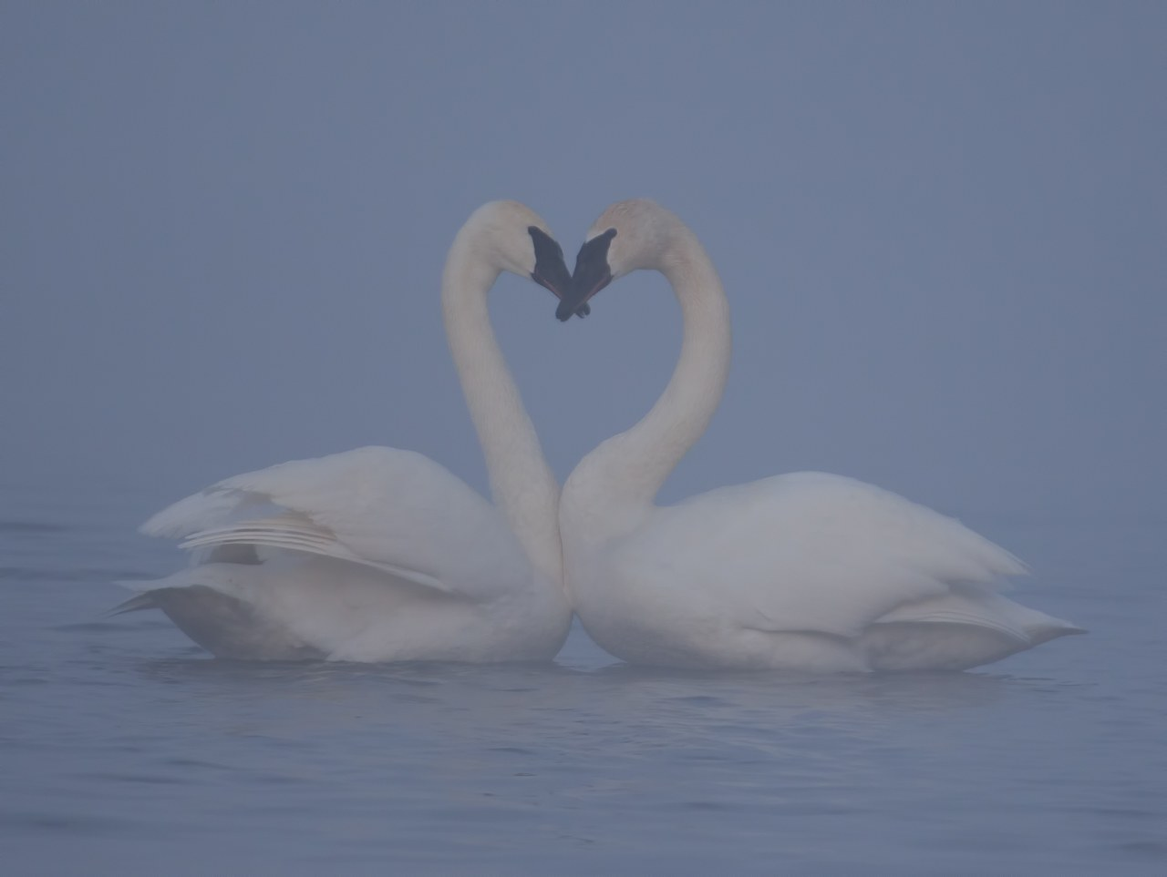 Honorable Mention - Love in the Mist - Larry Weinman - WWPC