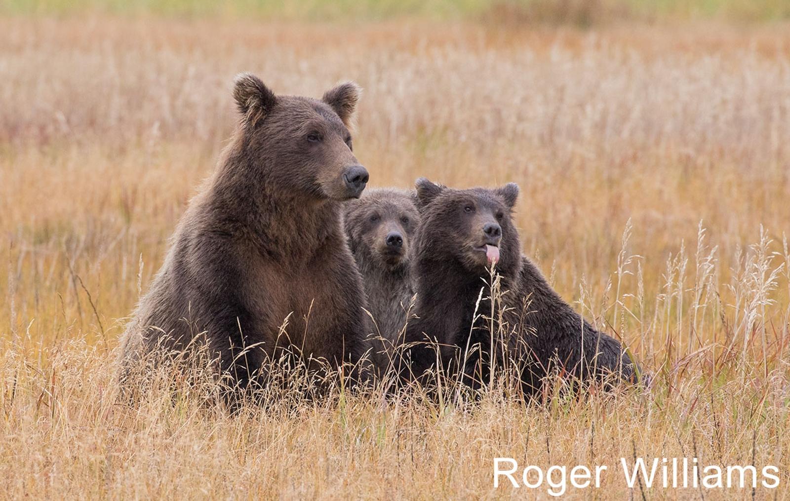 W1-08.The-three-bears