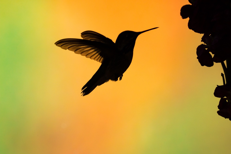 Honorable Mention - Silhouette - Melissa Anderson - Western Wisconsin Photography Club