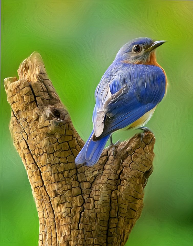 Eastern Bluebird Don Specht - MNPC