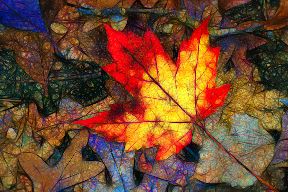 Award - Fallen Maple Leaf in Abstract - Ken Wolter - Western Wisconsin Photography Club