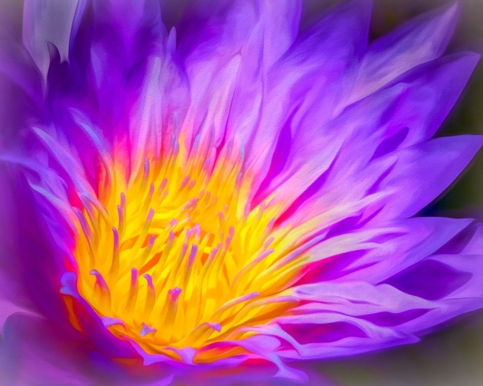 Honorable Mention - Waterlily Marianne Diericks - Western Wisconsin Photography Clu