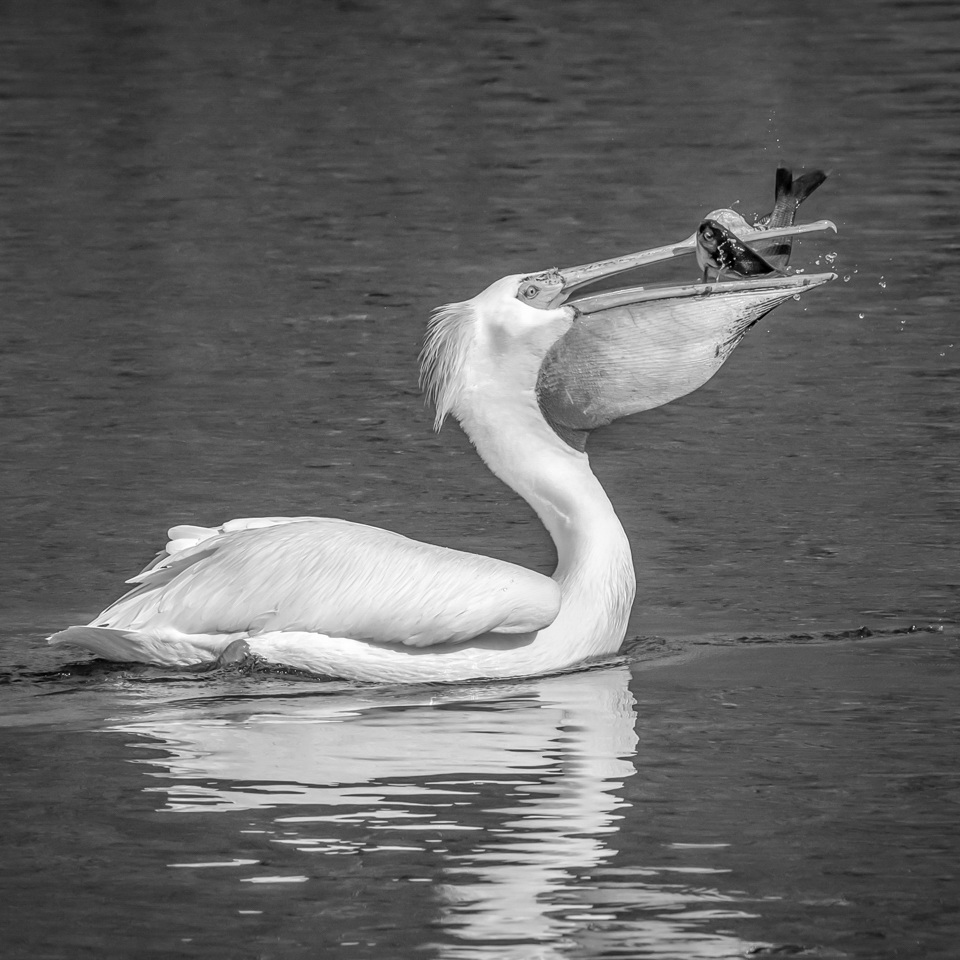 Honorable Mention - Nice Catch! - Marianne Diericks - Western Wisconsin Photography Club