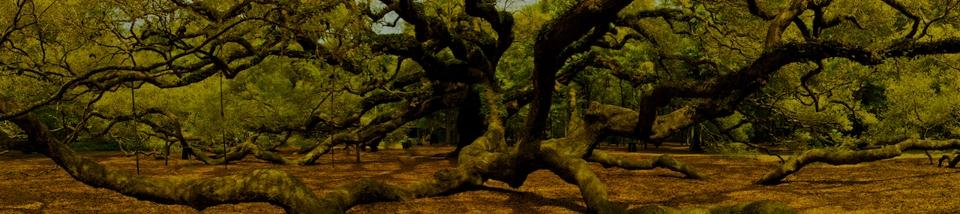 Angel Oak Wide - Sharon Gibbons - MCC