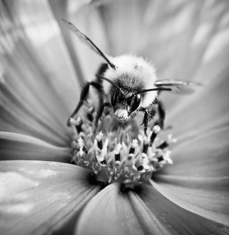 Bee Feed - Julie Ackerman - MVPC