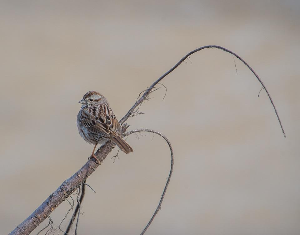 Bird On A Bending Stick - Scott Landseidel - MNPC
