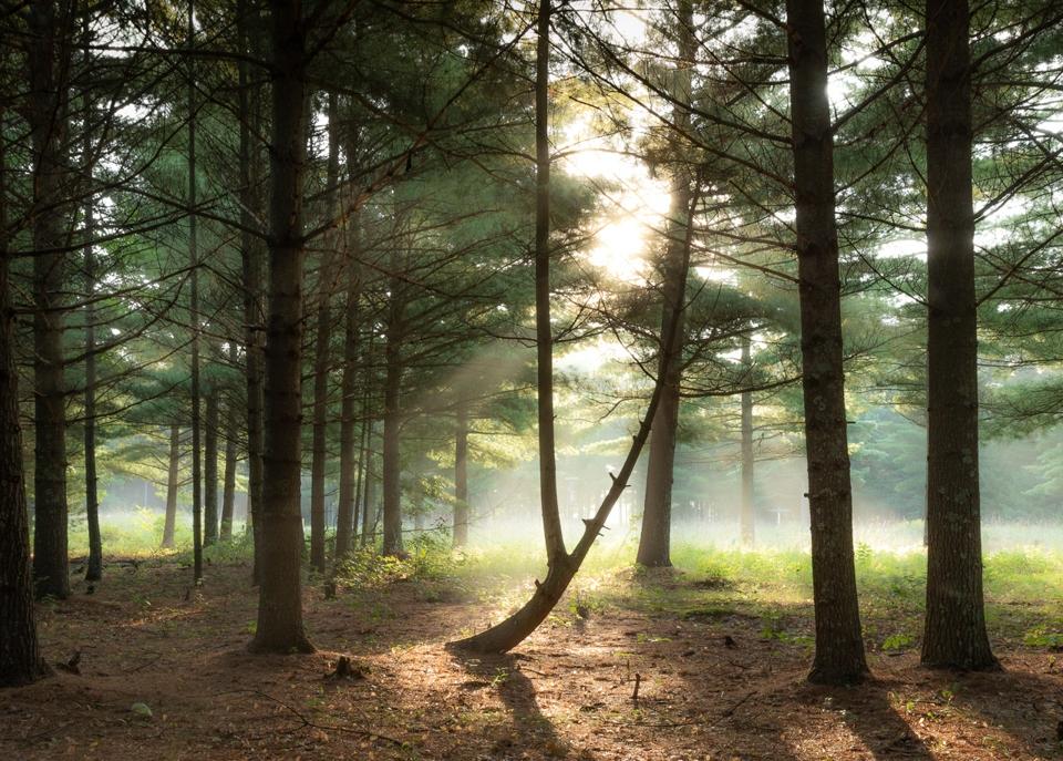 Crex Meadow morning - Deanne Probst - MNPC
