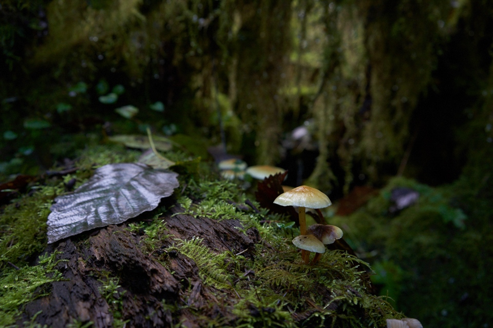 Forest Floor - Mike Fuerst - MPS