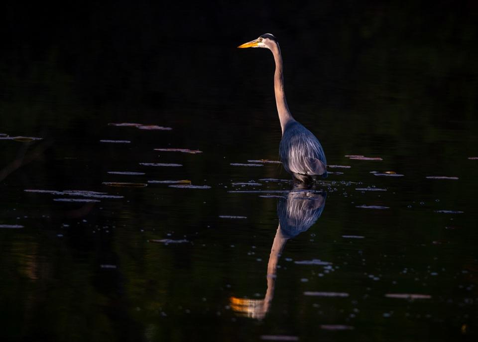 Oasis Lake #1 - Rixchard Birger - SPCC
