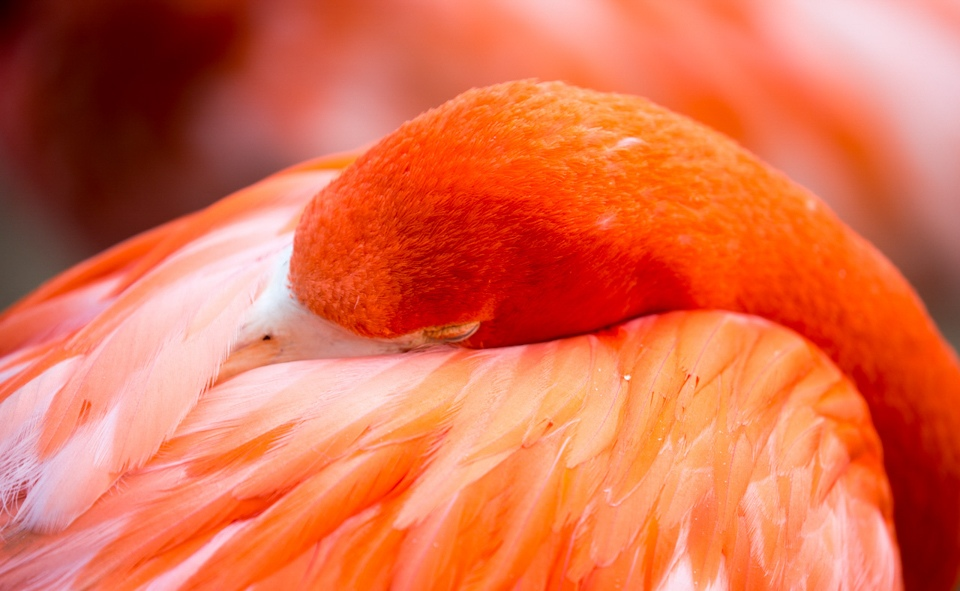 Sleeping Flamingo - Tom Schendel - NMPC