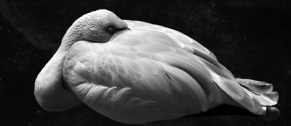 Award - Flamingo Stance II - Patricia Jones - North Metro Photo Club