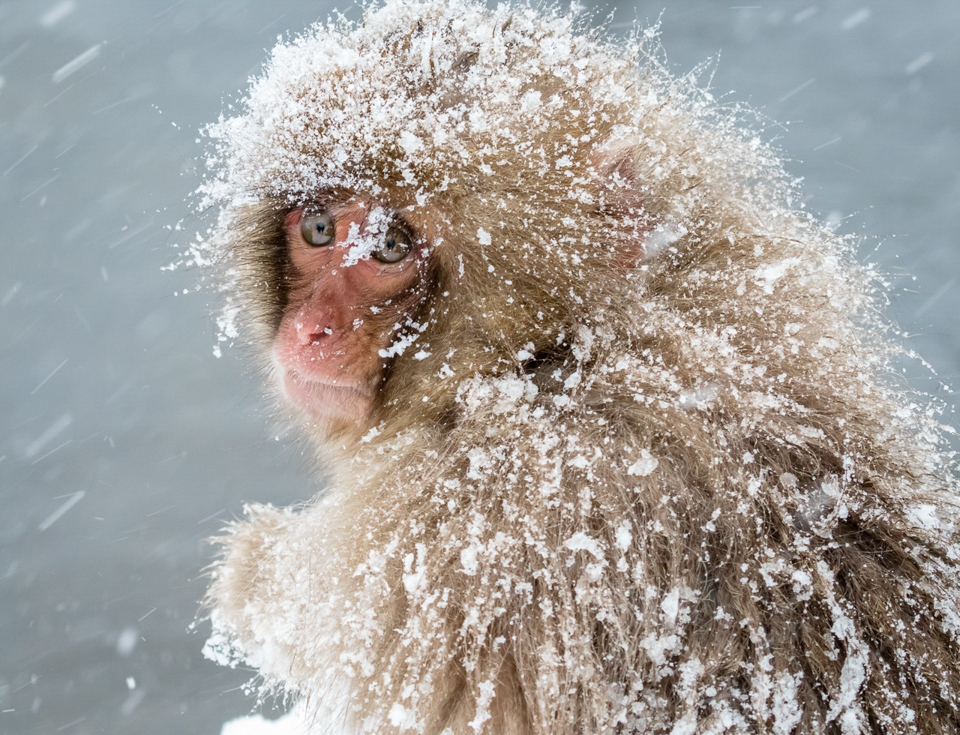 Award - Really Cold - Carl Fiegenshcuh - Minnesota Nature Photography Club