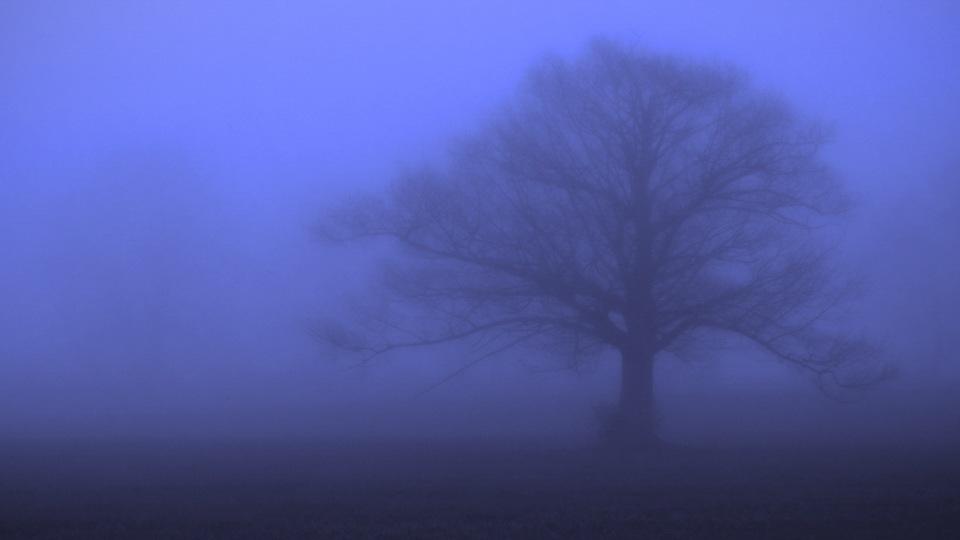 Door County Trees in Fog - Gene Schwope - SPCC