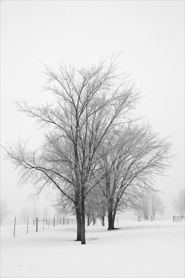 Frosty morning - Shirley Boyer - SCVCC