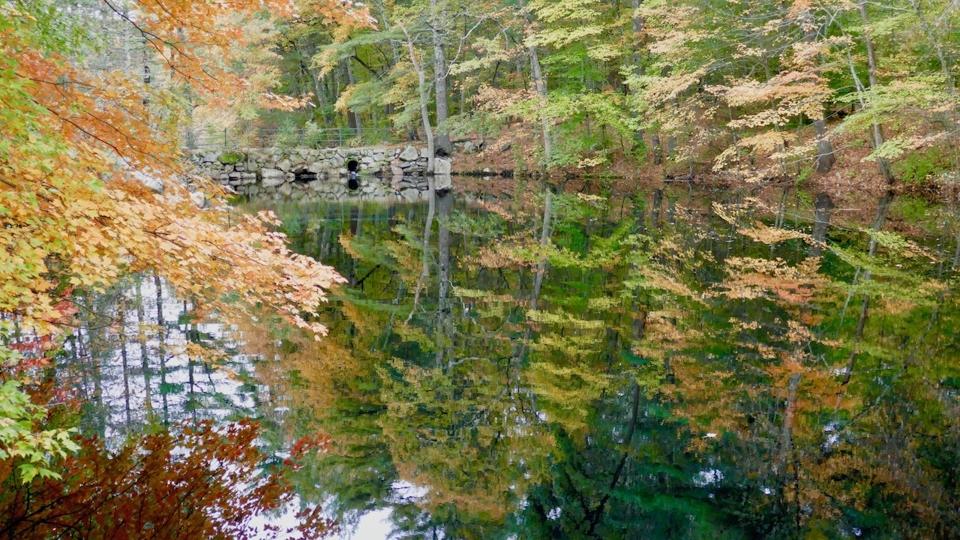 Noanet Pond - Jane Wachutka - SCVCC