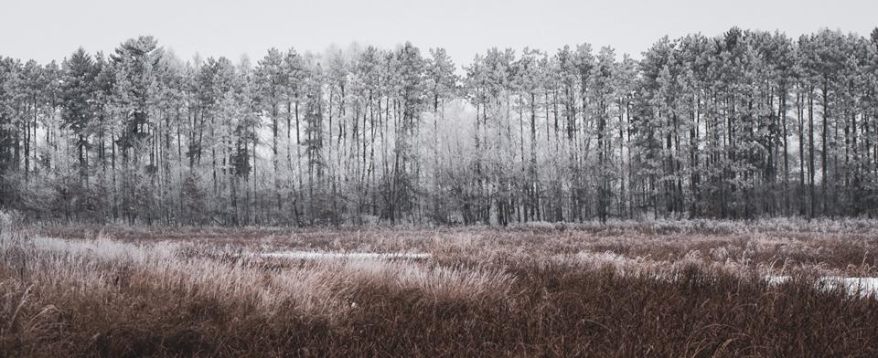 Winter's Silence - Leanne Zeller - MCC