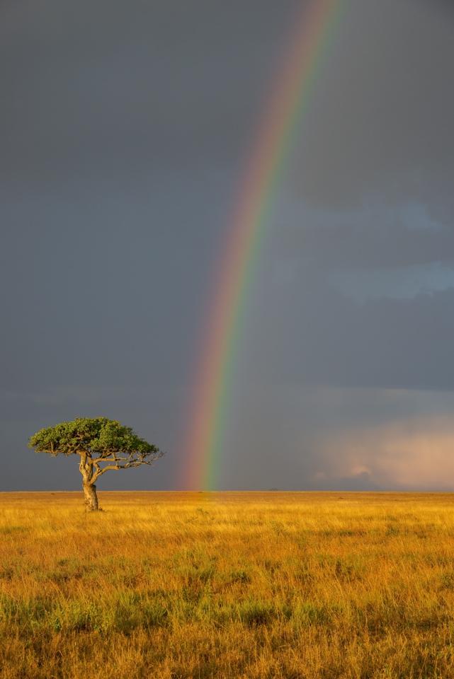 Honorable Mention - Serengeti Rainbow - Diane Herman - Minnesota Nature Photography Club