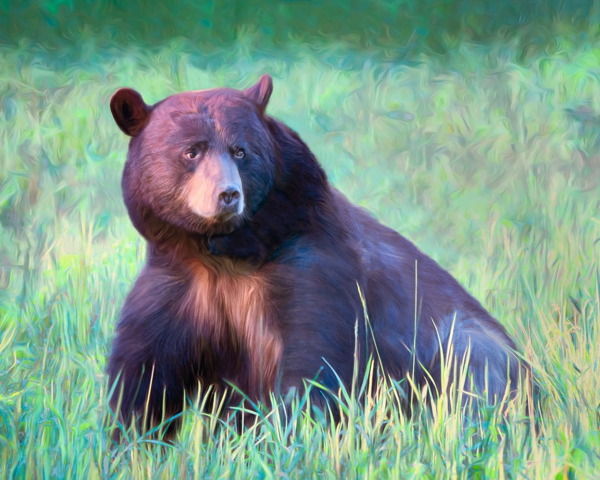 Bear In Meadow - Marianne Diericks - WWPC