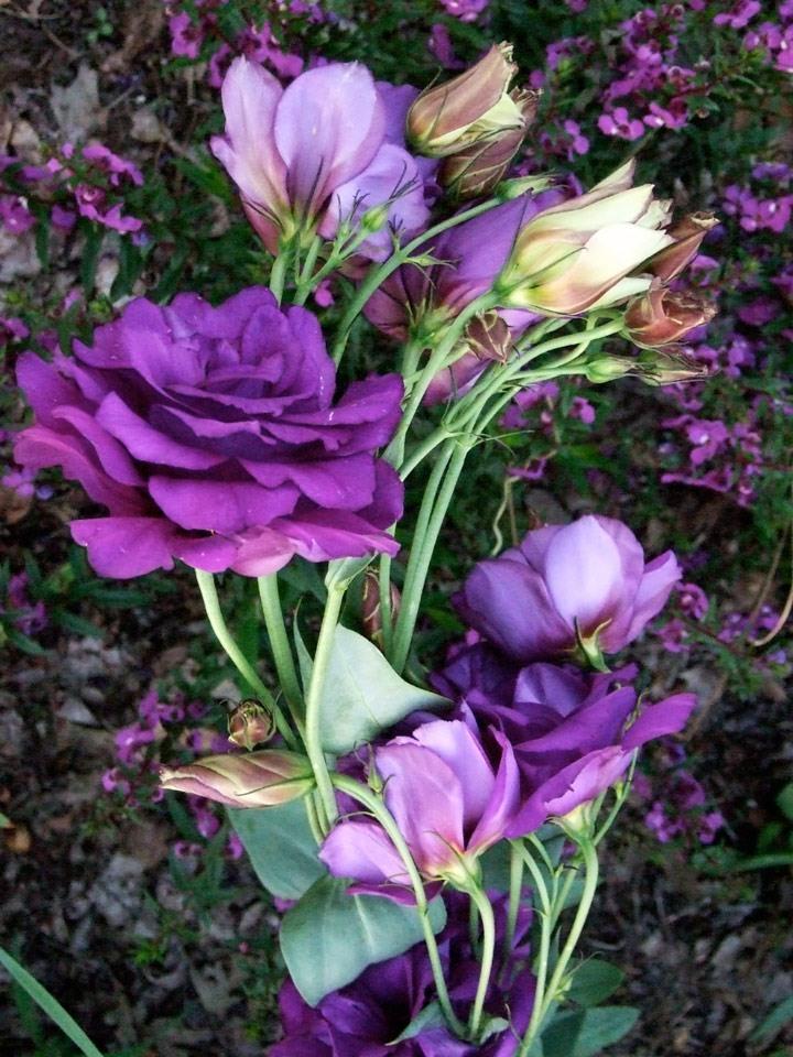 Fallen Flowers - Eileen Matro- FSSPCC