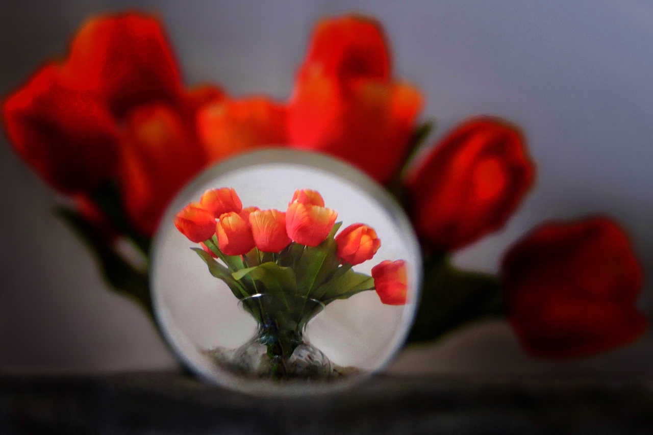 Tulips At Large - Jenny Noecker - SPCC