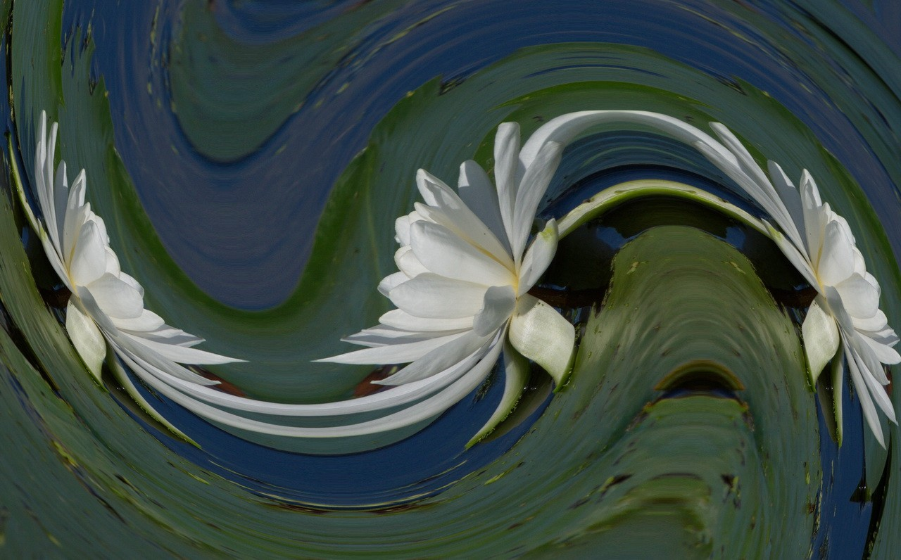 Whirling Waterlily - Roberta Mullin - SPCC