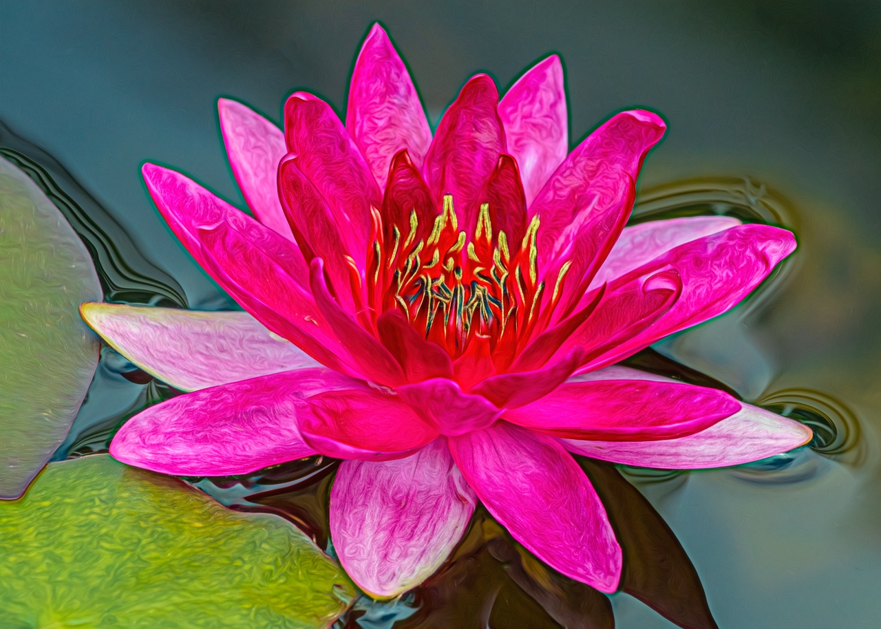 2nd Place Runner Up - Radiant Waterlily - Marianne Diericks - Western Wisconsin Photography Club