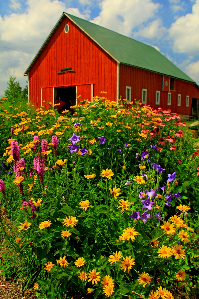 Honorable Mention - Common Harvest Farm - Linda McKusick - St Croix Valley Camera Club