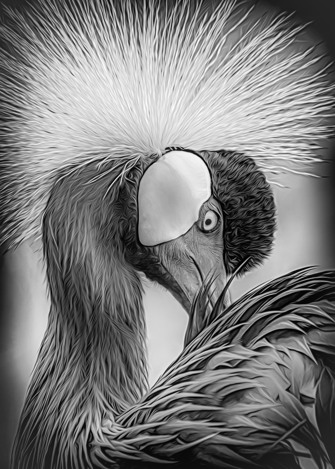 Honorable Mention - Crowned Crane - Marianne Diericks - Western Wisconsin Photography Club