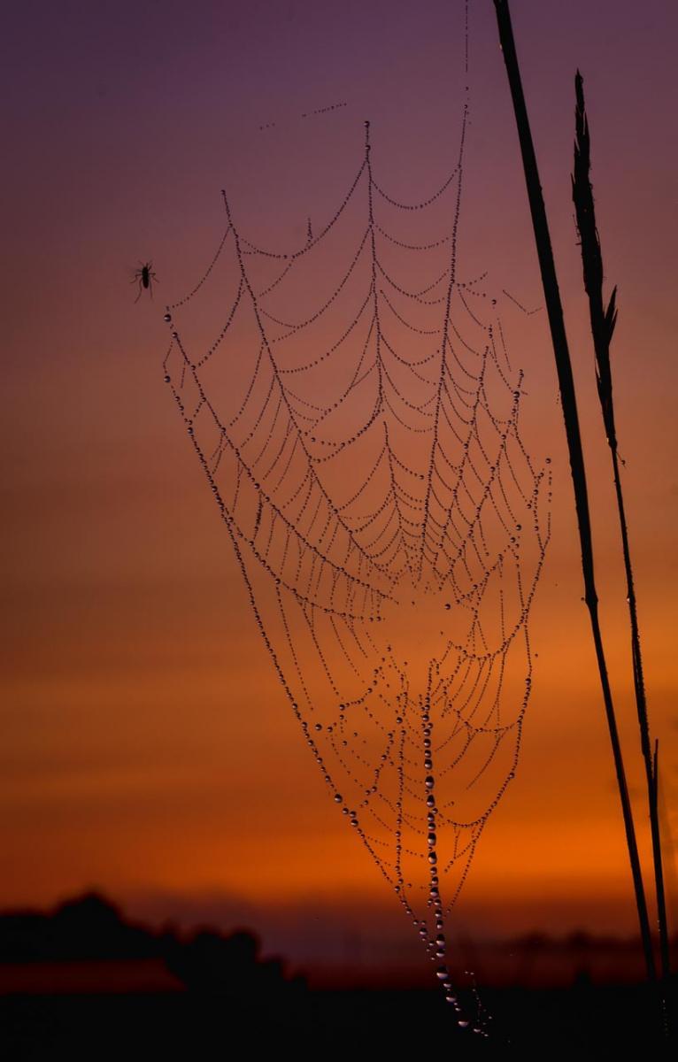 Spider Web - Ron Lagerquist - MNPC
