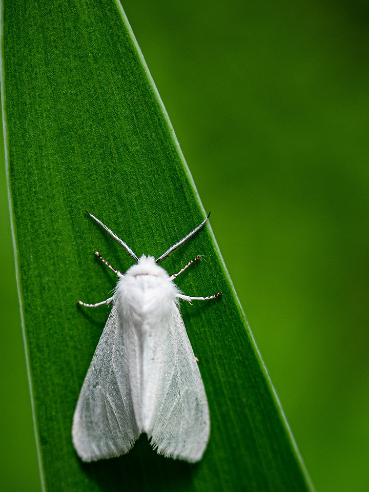 White on Green - Pat Boudreau - NMPC