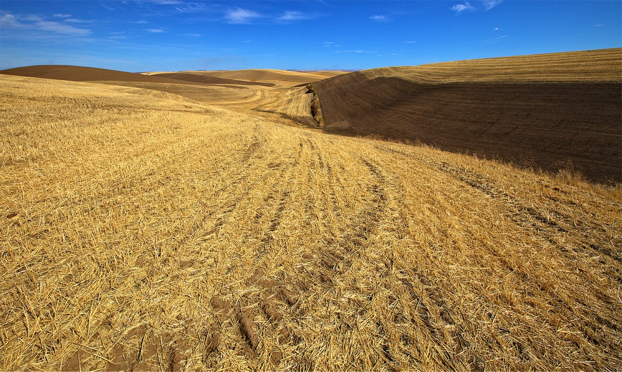 Harvested Field - Tom Birrenbach - TNPC