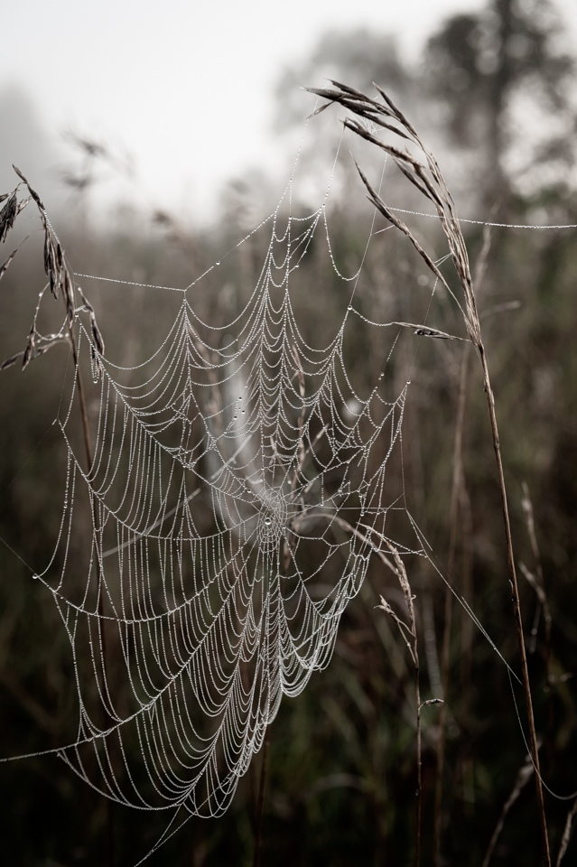What the Dew Reveals - Leanne Zeller - MCC.jpg