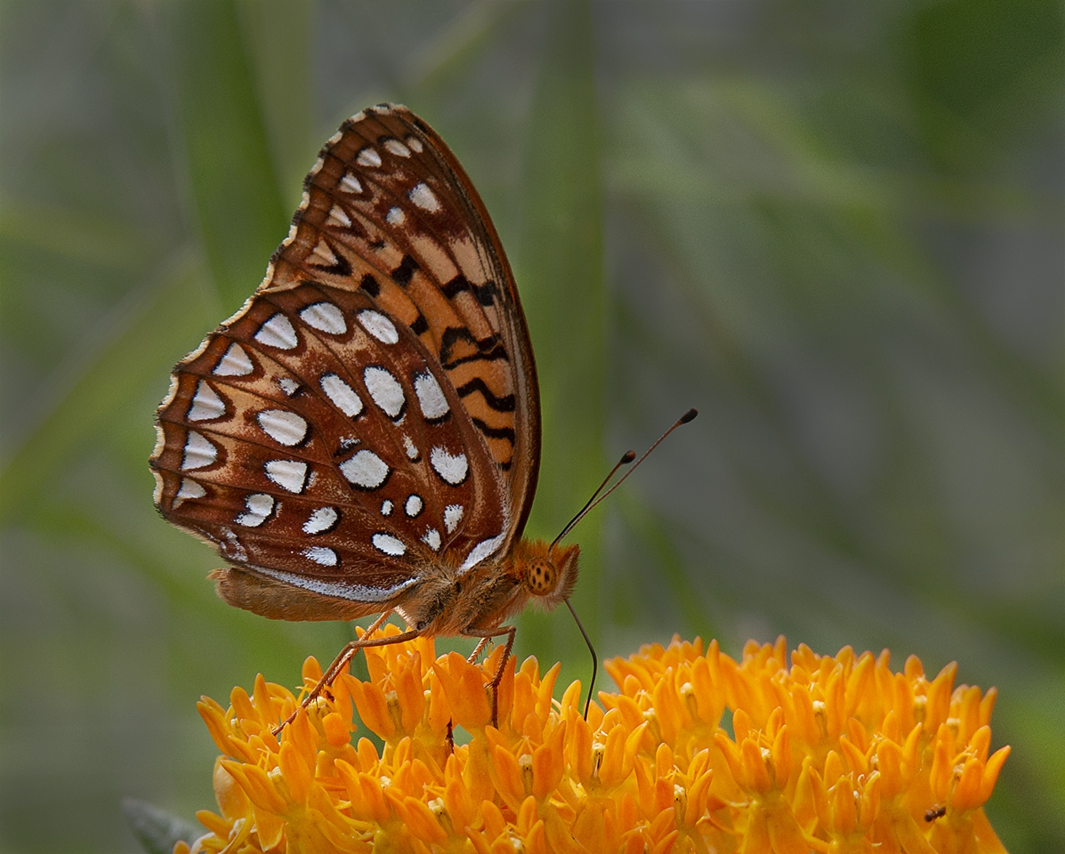 Award - Summer Frit - MJ Springett - Western Wisconsin Photography Club