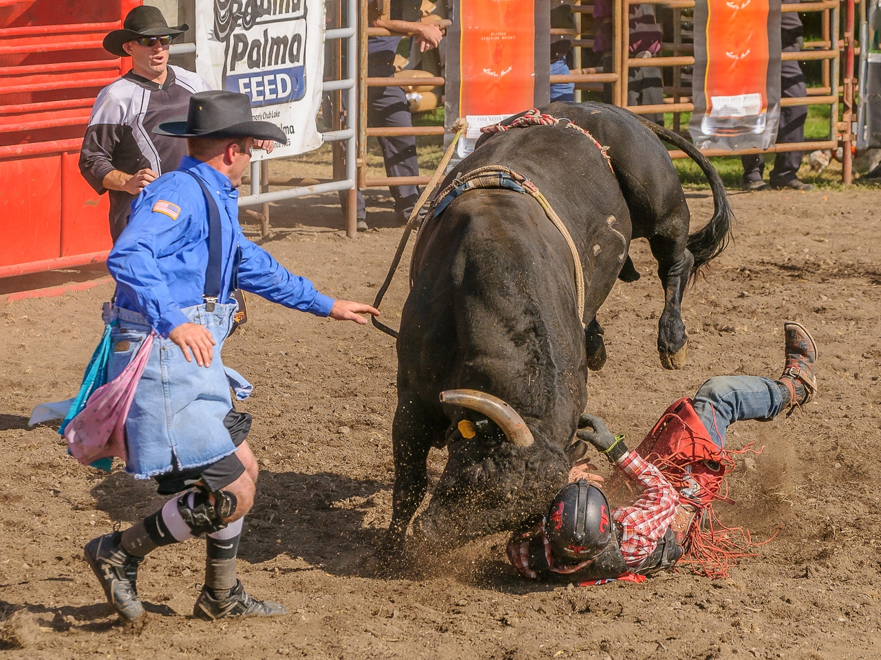 Honorable Mention -  When the Bull Wins - David Perez - Minnesota Valley Photo Club